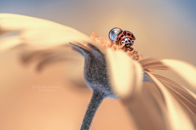 Lady with waterdrop