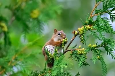 A squirrel's feast