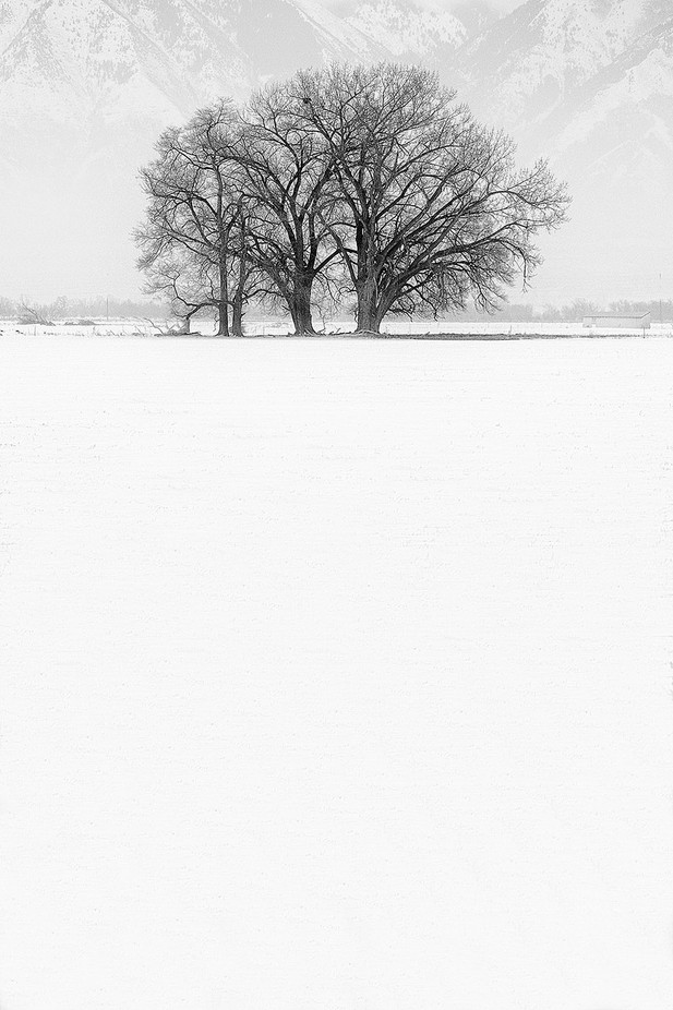 Siberian Elm in Fog by springlake - Composing with Negative Space Photo Contest