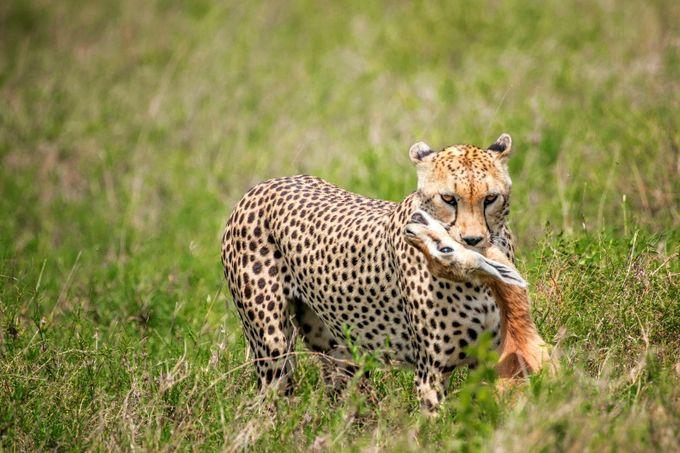 wildlife extreme by Andre11 - Wildlife Photo Contest 2017