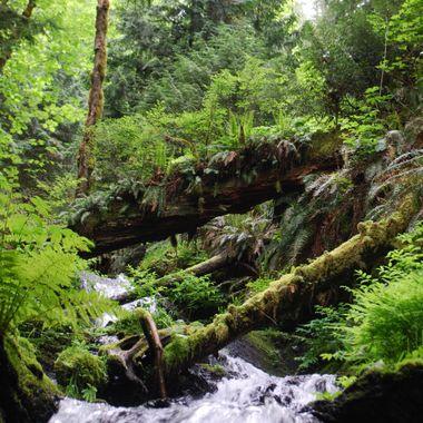 PRIMITIVE FALLS - Nanoose Waterfall off Island Highway - May 16, 2014