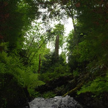 PRIMITIVE RAIN FOREST - Nanoose Waterfall off hwy May 16, 2014
