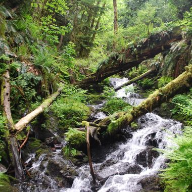 JUNGLE RAIN FOREST - Nanoose Waterfall off hwy May 2014