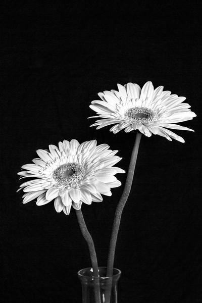 Flower 2016