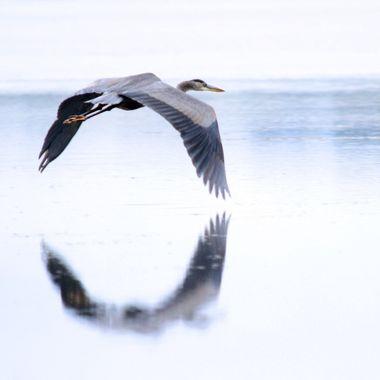 Reflection of flight