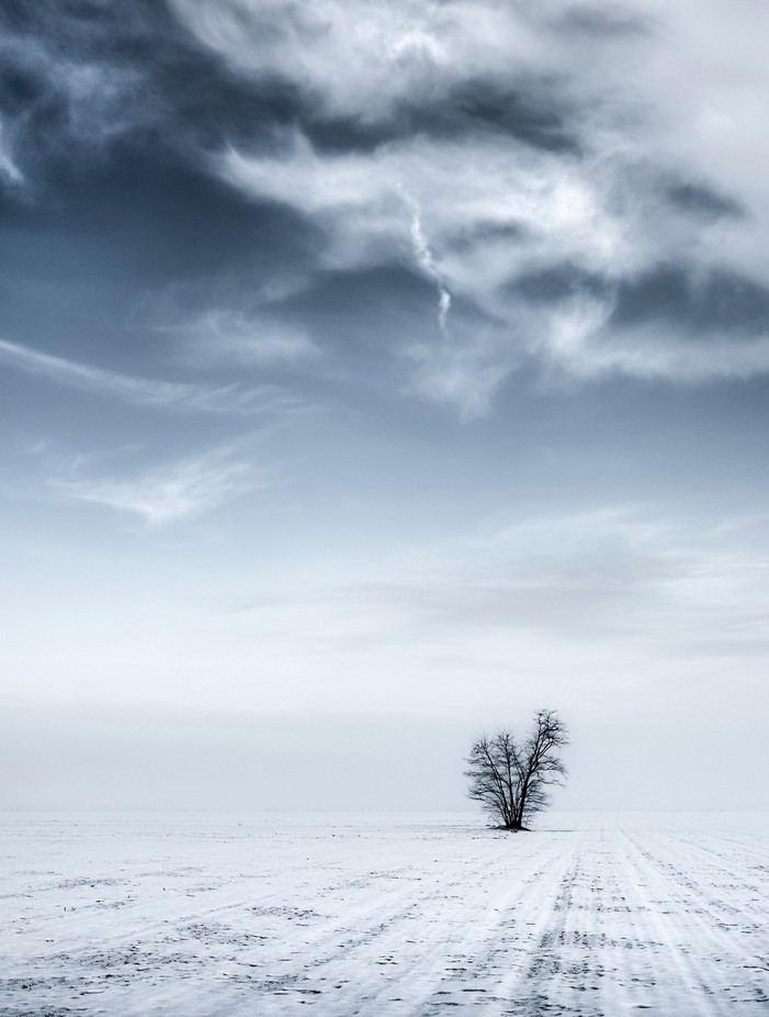 Lone tree by livioferrari - A Lonely Tree Photo Contest