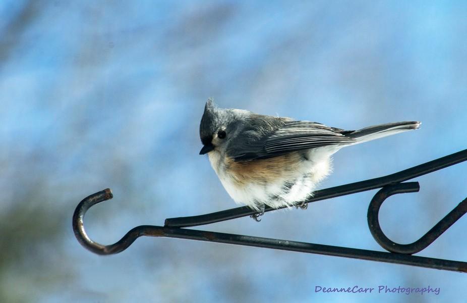 fluffy bird on hanger