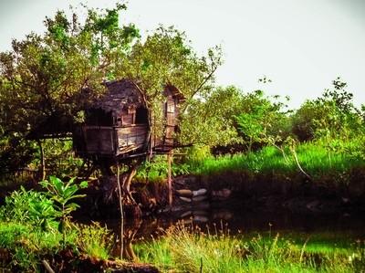 tree house lvl 99