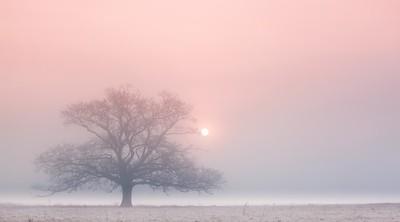 Pastel morning