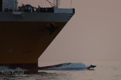Surfing the Bow of a Ship