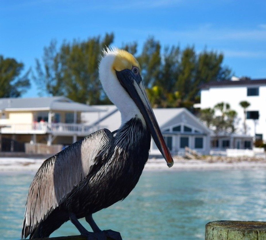 Anna Marie Island, Florida - so tame!