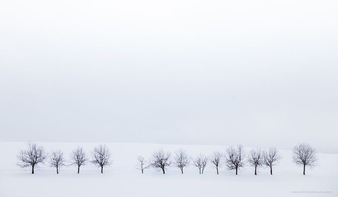 Hokkaido by Forrest_Brown - More Of The Same Photo Contest