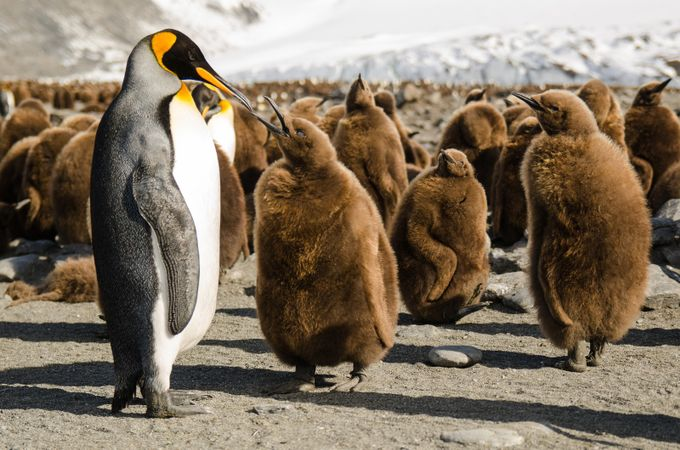 Lunch time ! by florentgaillard - World Expeditions Photo Contest