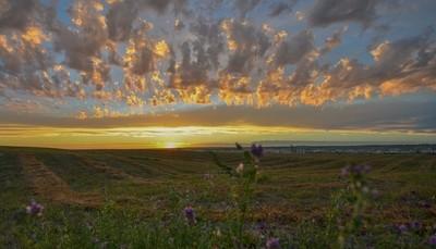 Sunset over alfalfa field