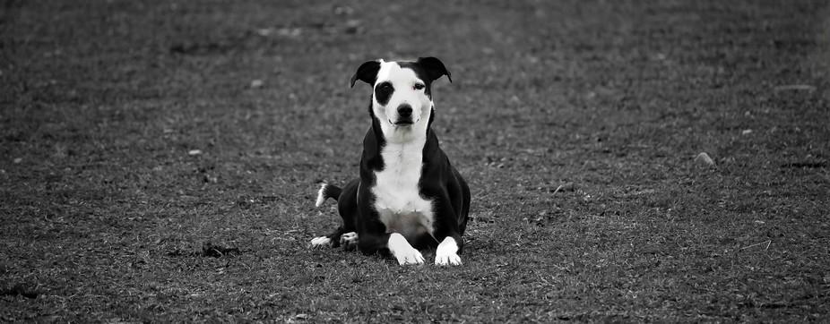 friends dog