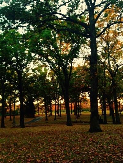 The park at sundown