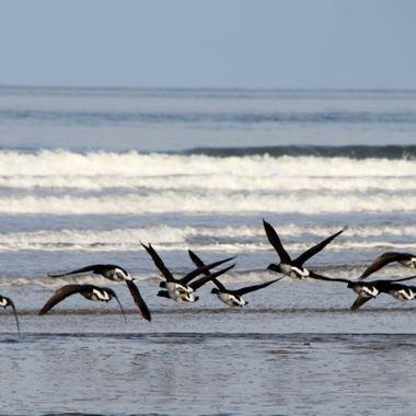 Keeping below the radar on Nairn beach 17/02/16