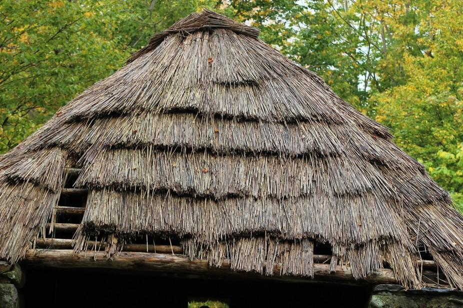 IMG_7251 hut roof