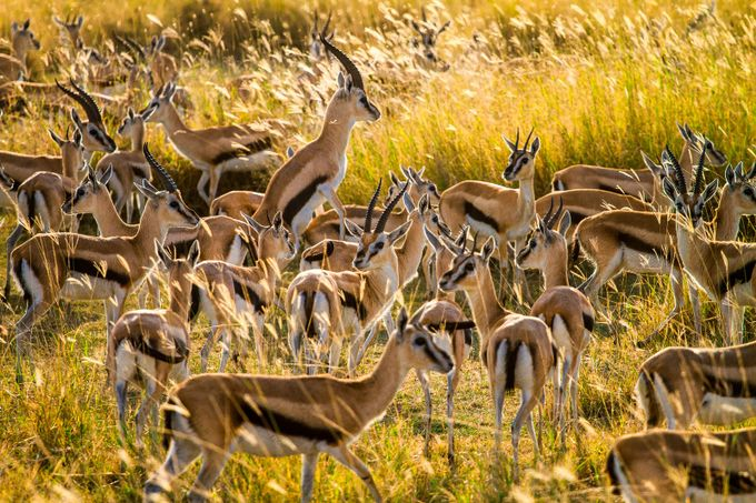 Living Gazelles by Mbeiter - World Expeditions Photo Contest