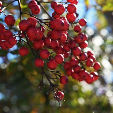 berry bokehlicious