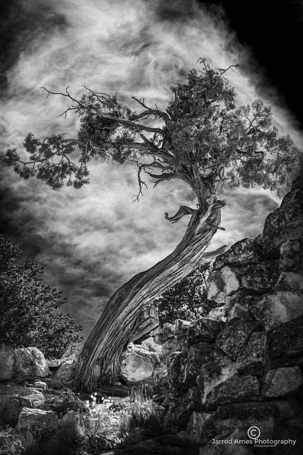 Stand Alone by jarrodames - Black And White Compositions Photo Contest vol2