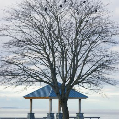 The CROWS OF PARKSVILLE - 25 Nov 2007