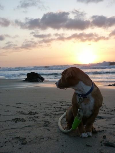 Puppy and sunrise