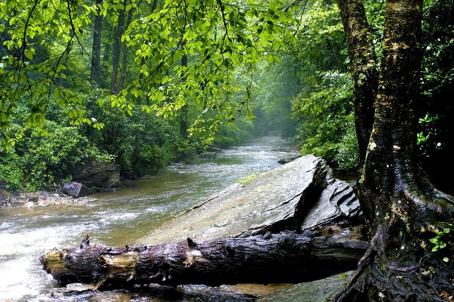 EOS Canon 350D @ 18mm.   North Carolina Creek (late 2000's)