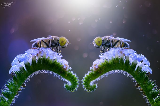 twin by yuliantopongge - Close Up Art Photo Contest