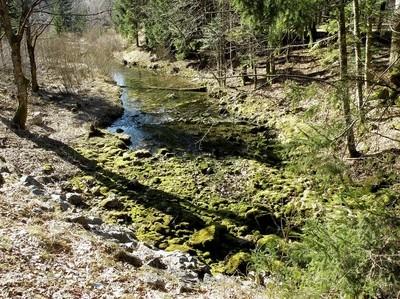 Creek Is Born