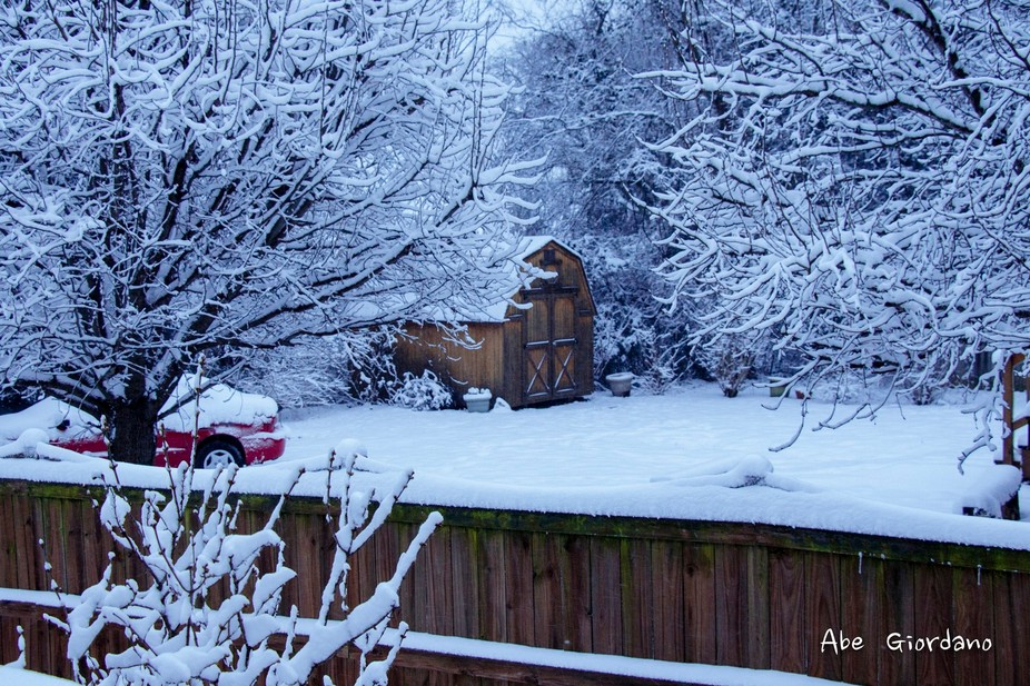 The first snowfall this winter dumped 8 inches on Nashville, Tennessee.  This is the view from my...