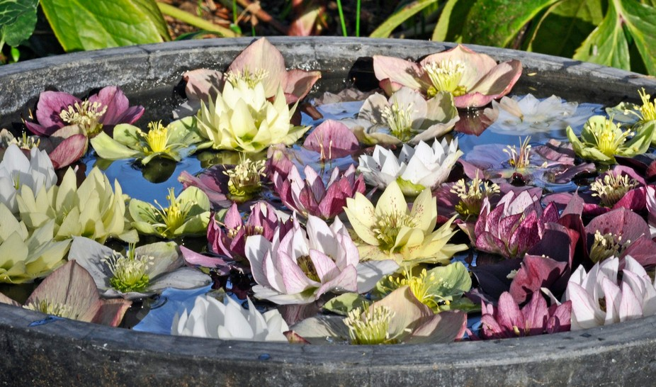 I came across this bowl of floating flowers at VanDusen Gardens.  Oh spring is on the way!