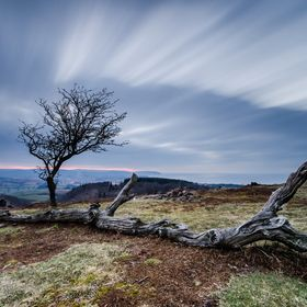 A dead tree and it's partner on the exposed flank of the Quantock Hills in Somerset, UK