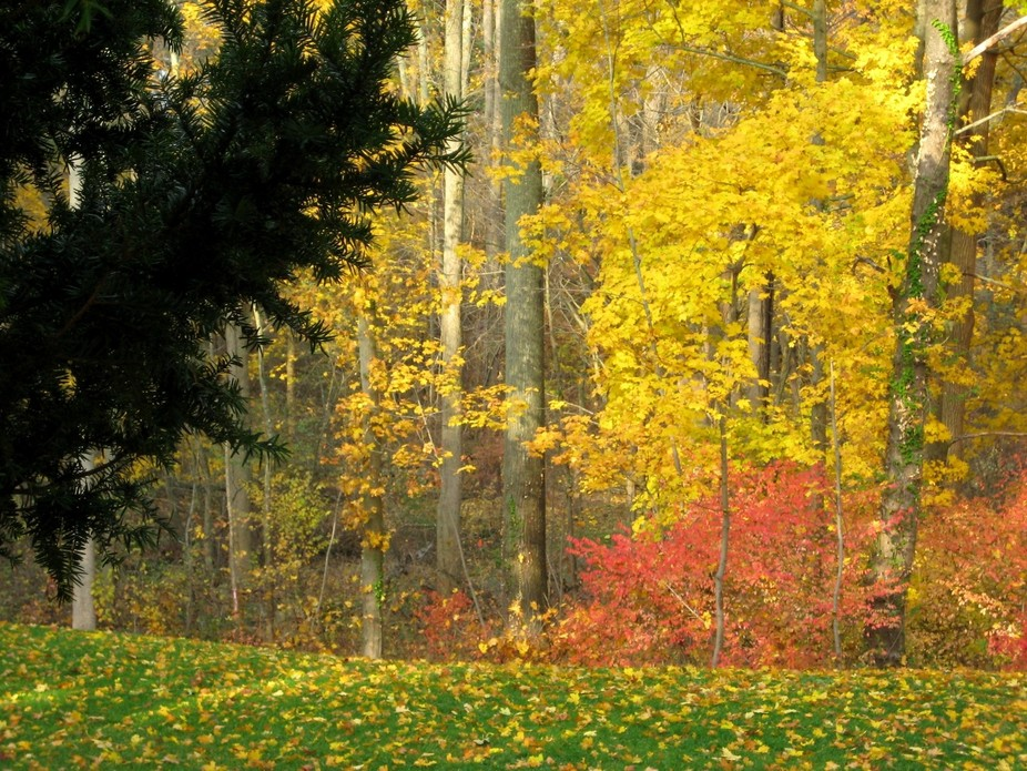 I am in awe of the changes which occur in the fall.  Autumn By: Winssome Miller-Rowe             ...