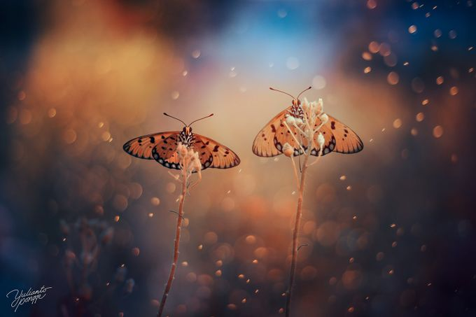 ROMANTIC by yuliantopongge - Beautiful Butterflies Photo Contest