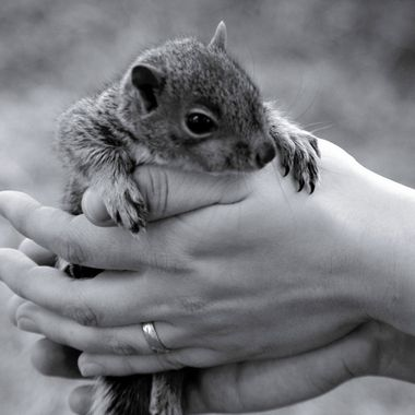 Baby squirrel in Canada