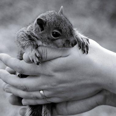 Baby squirrel in Canada
