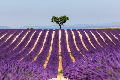 The hearth of provence