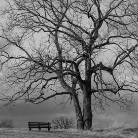 A lone park bench sits atop a small hill, waiting for winter to end.