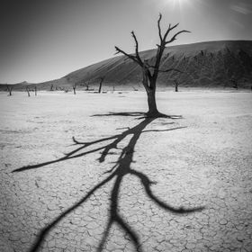 Deadvlei in the Namib-Naukluft National Park