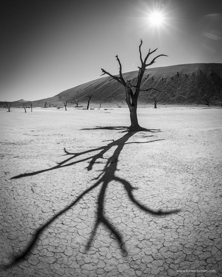 Black And White Trees Photo Contest Viewbugcom
