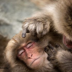 snow monkeys body care
