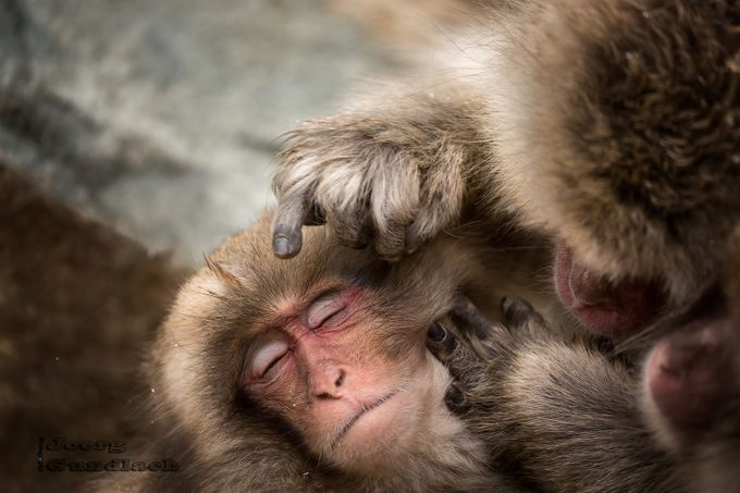 Bodycare by Joerg - The Magic Of Japan Photo Contest