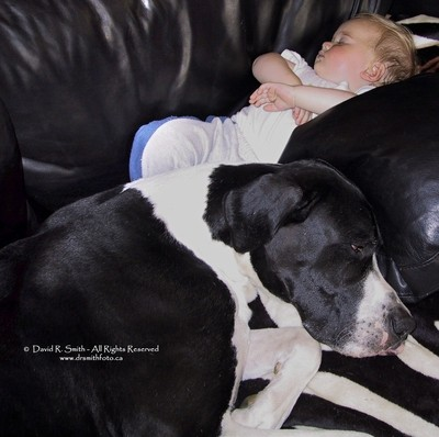 ORCA The Mantle Great Dane and Baby asleep on couch - Photo by David R. Smith