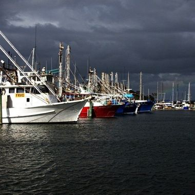 Commercial fishing fleet, Tin Can bay, Queensland, Australia