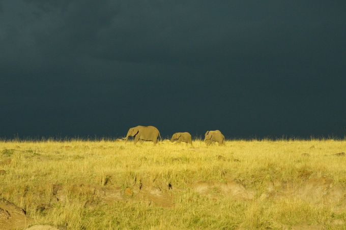 Masai Mara  storm building up by Brenda13 - Composing with Negative Space Photo Contest