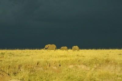 Masai Mara  storm building up