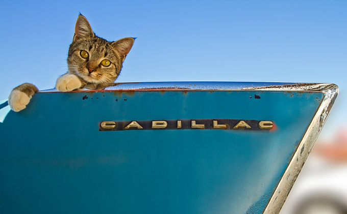 Catillac by photopainter10 - My Favorite Car Photo Contest