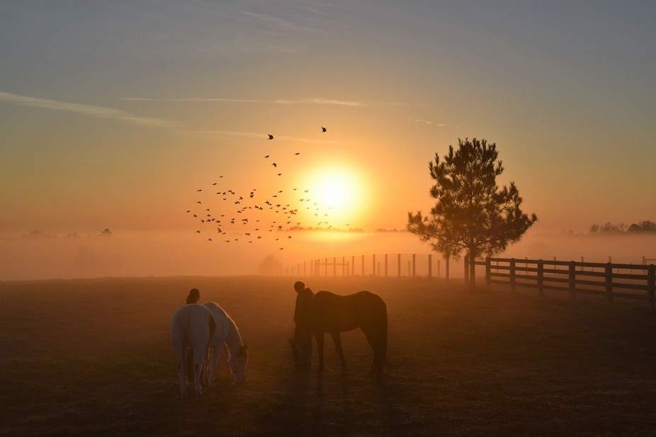 Blessed to witness this at horse competition.  The sunrise, mist, birds, girls and horses... magi...