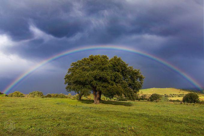 Carpe Diem by Janx - Rainbows Overhead Photo Contest